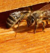 APIdays 2012 : la fête des abeilles sentinelles
